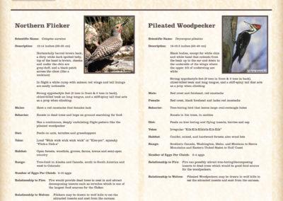 DiscTrail_Flicker Pileated Sign-ArtRls