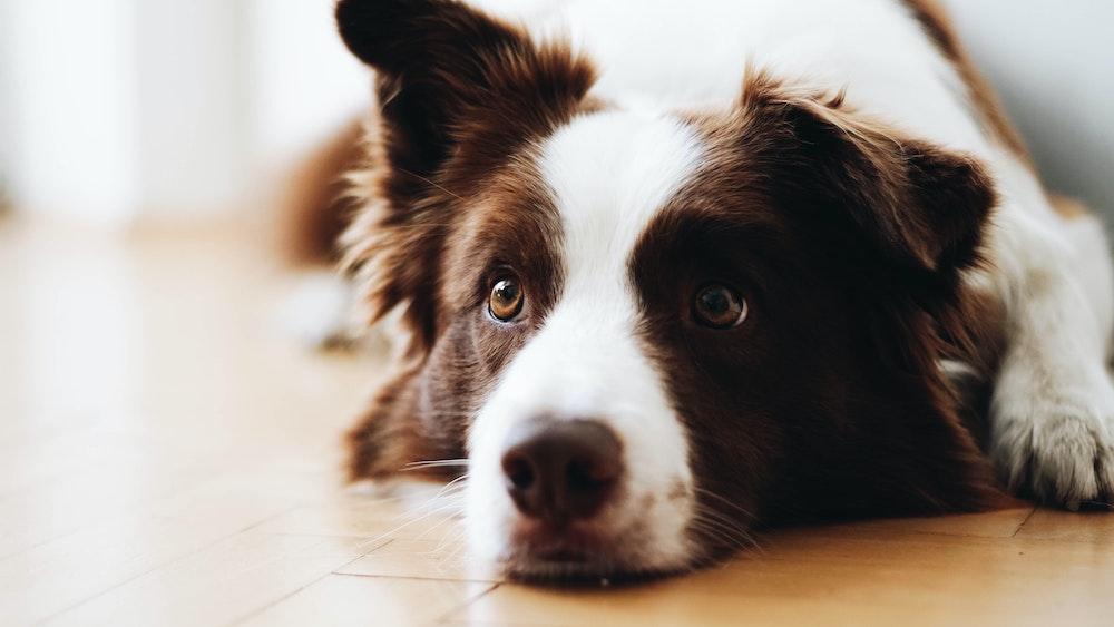 The History of Dog Breeding