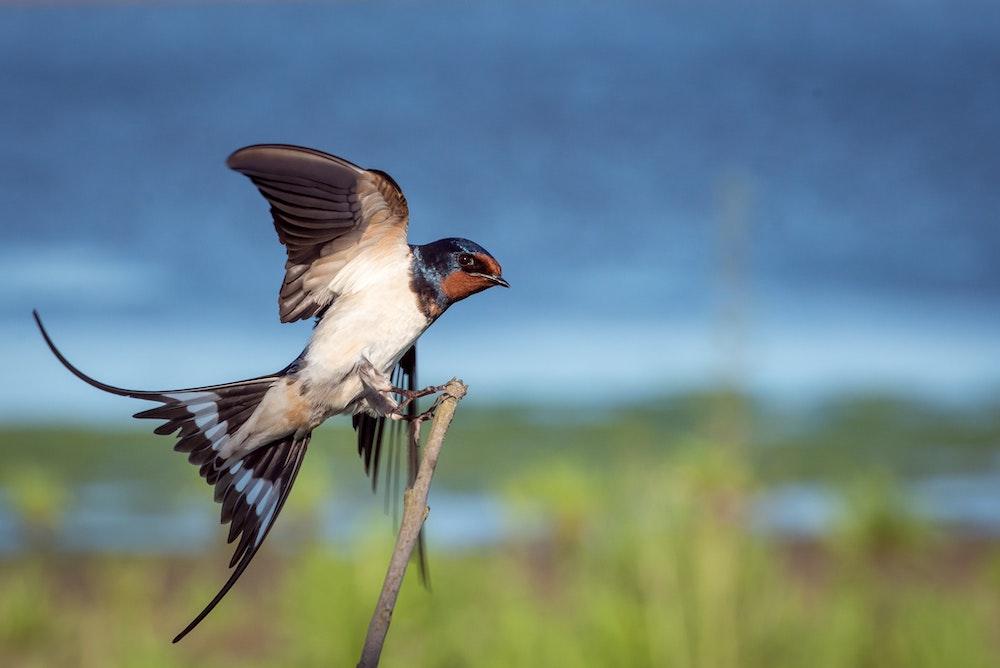 What is Wildlife Telemetry?