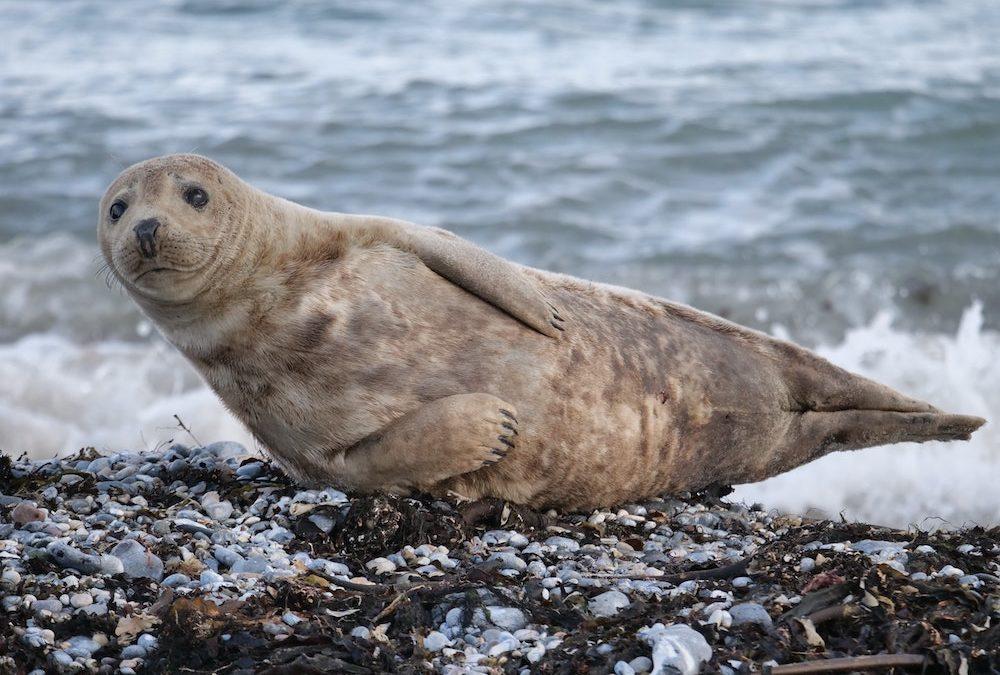 Let's Talk About Seals!